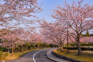fuji_sakura201902l.jpg