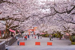 fuji_sakura201902n.jpg
