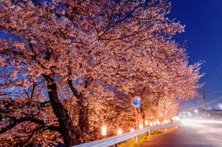 fuji_yozakura2019g.jpg