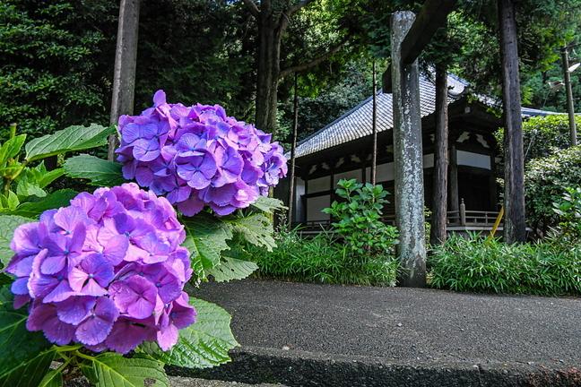 iwamoto20200620n.jpg