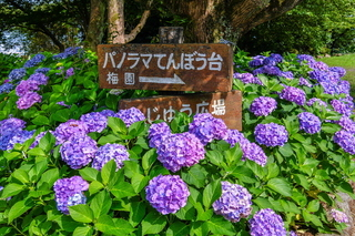 iwamoto20200627h.jpg