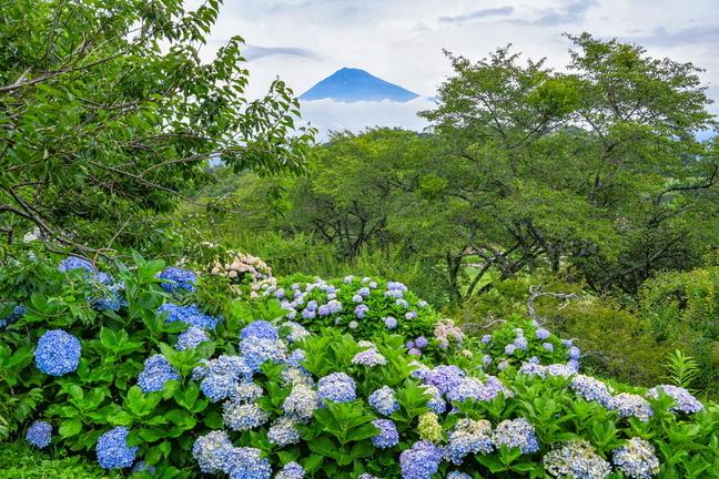 iwamoto20200703a.jpg