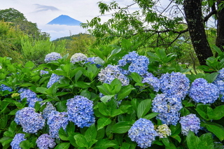 iwamoto20200703c.jpg