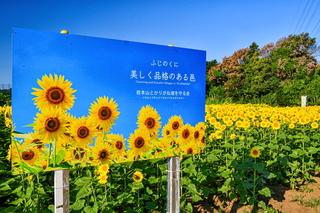 iwamoto_himawari2021g.jpg