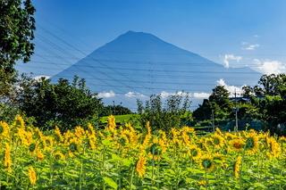 iwamoto_himawari2021j.jpg