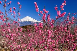 iwamoto_ume202102c.jpg