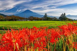 kari_higanbana2020b.jpg