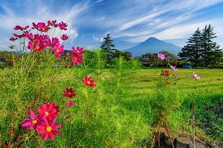 kari_higanbana2020j.jpg