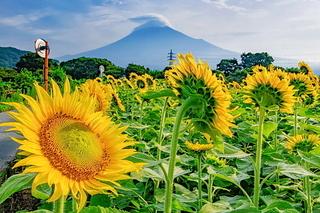 karigane_himawaeri2020c.jpg
