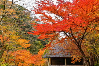 sudo_kouyou2020i.jpg