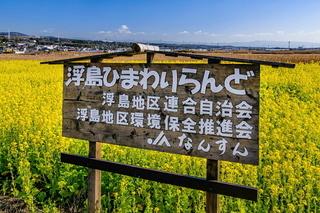 ukihl_nanohana2020g.jpg
